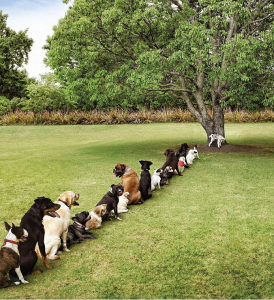 Stop cutting down trees!