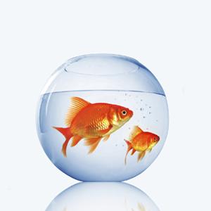 evolutionyou.net | self-limiting beliefs