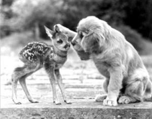 evolutionyou.net | kindness
