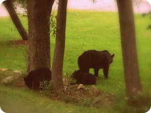 evolutionyou.net   our bears