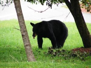 evolutionyou.net | our bears