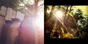 forest walks | evolutionyou.net
