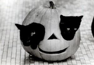 evolutionyou.net | Halloween kittens