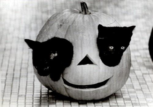 evolutionyou.net | Halloween kittens