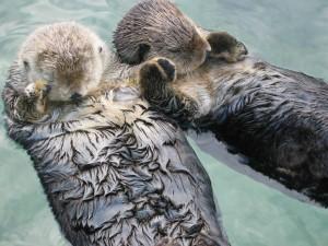 evolutionyou.net | sea otters