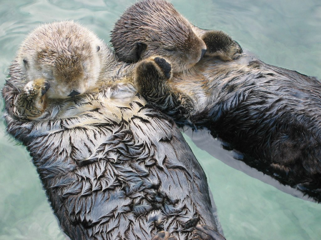 evolutionyou.net | sea otters