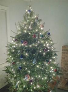 evolutionyou.net | christmas tree