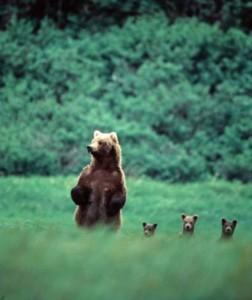 evolutionyou.net   bears