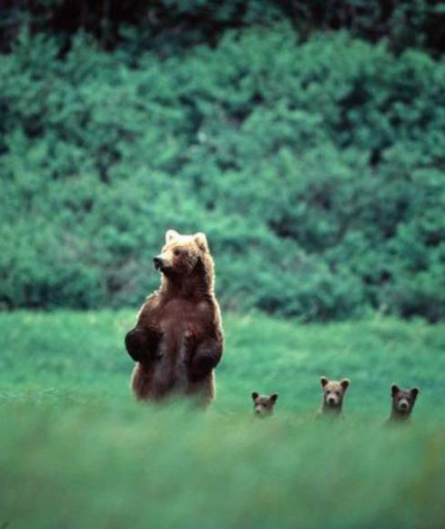 evolutionyou.net | bears