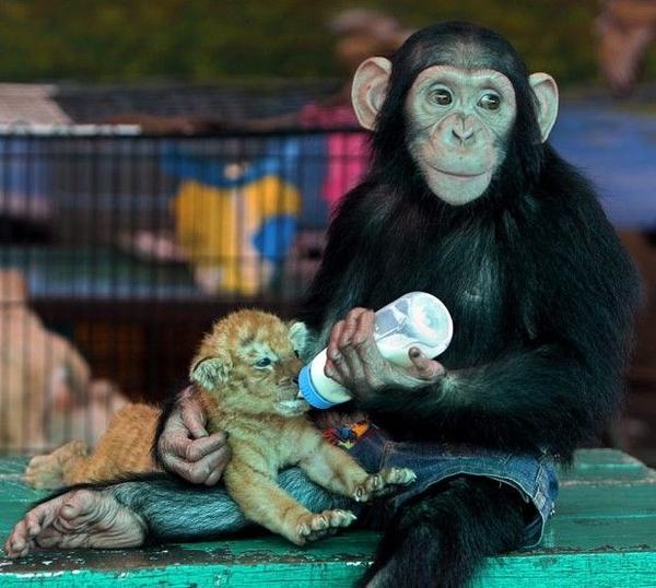 evolutionyou.net   baby monkey