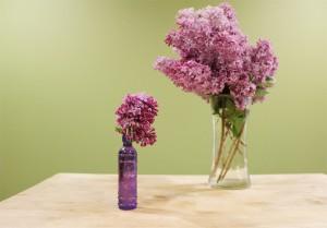 evolutionyou.net   lilacs