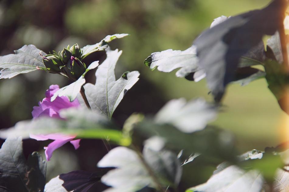evolutionyou.net   flower buds