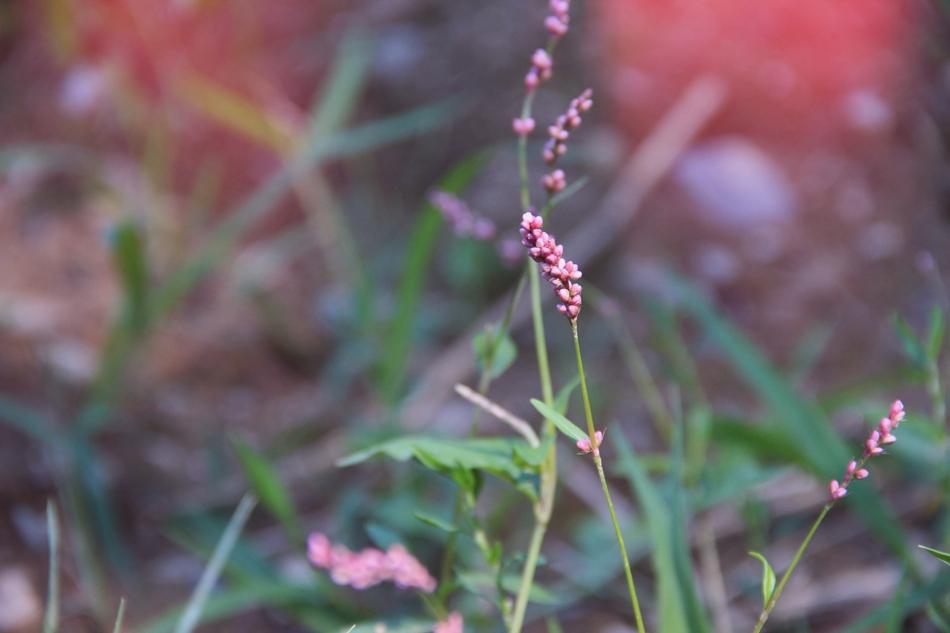 evolutionyou.net | wildflowers