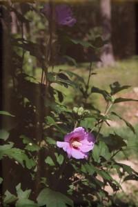 evolutionyou.net | flowers