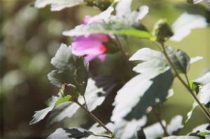 evolutionyou.net | flower buds