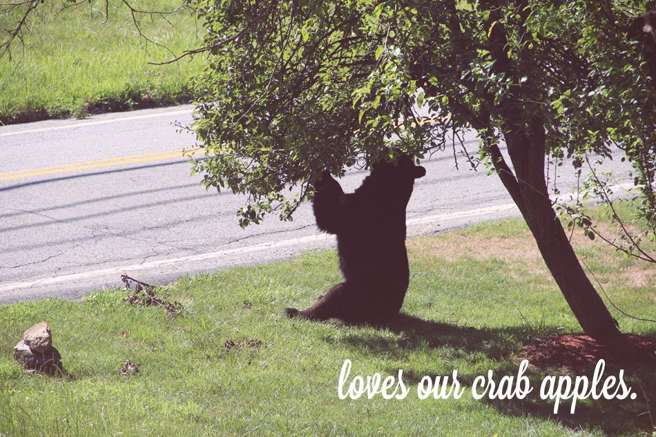 evolutionyou.net   black bear