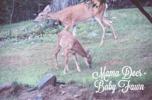 evolutionyou.net   deer