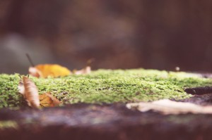 evolutionyou.net | autumn in the woods (1)