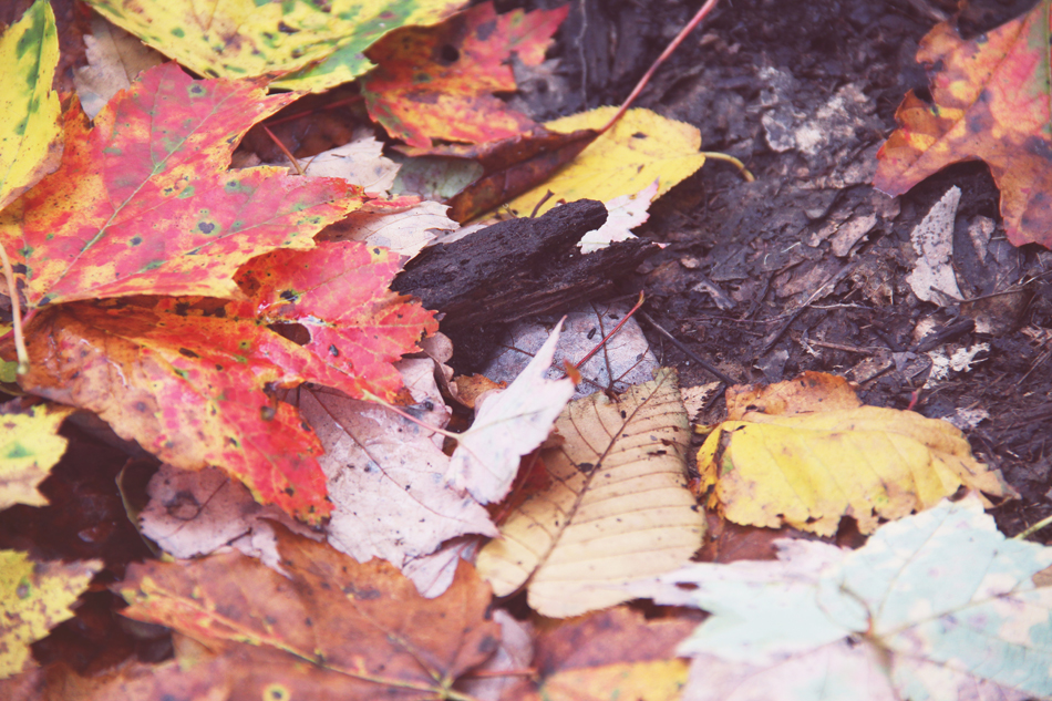 evolutionyou.net | autumn in the woods (5)