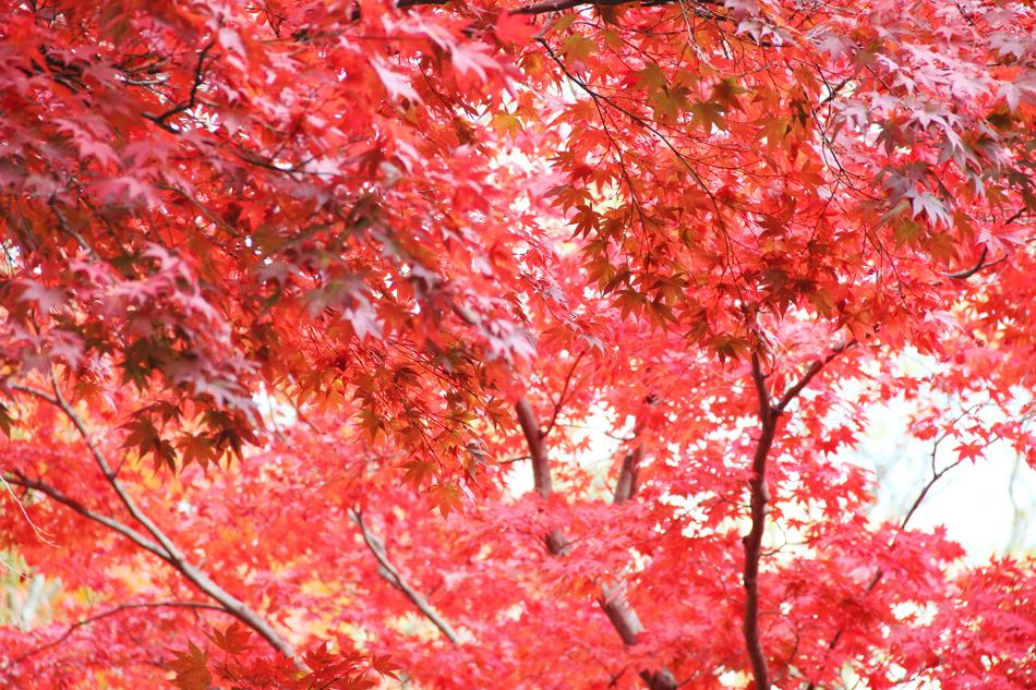 evolutionyou.net | autumn sunday (7)