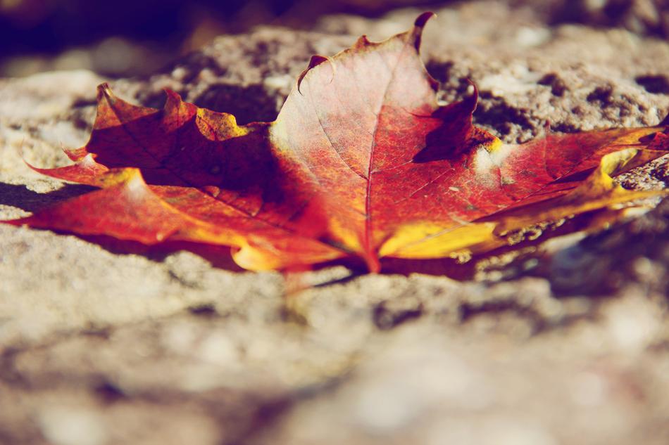 evolutionyou.net | autumn sunday (4)