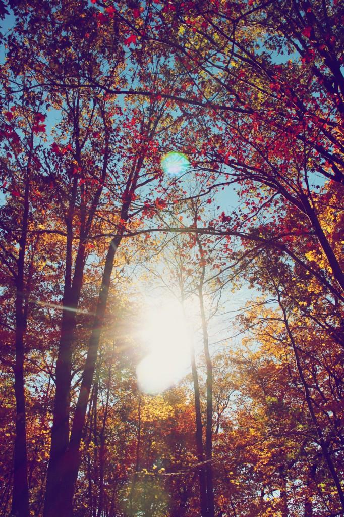 evolutionyou.net | autumn sunday (2)