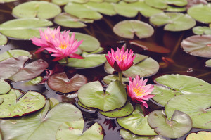 lily pads | livelovesimple.com