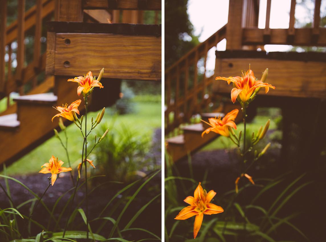 livelovesimple.com   tiger lily