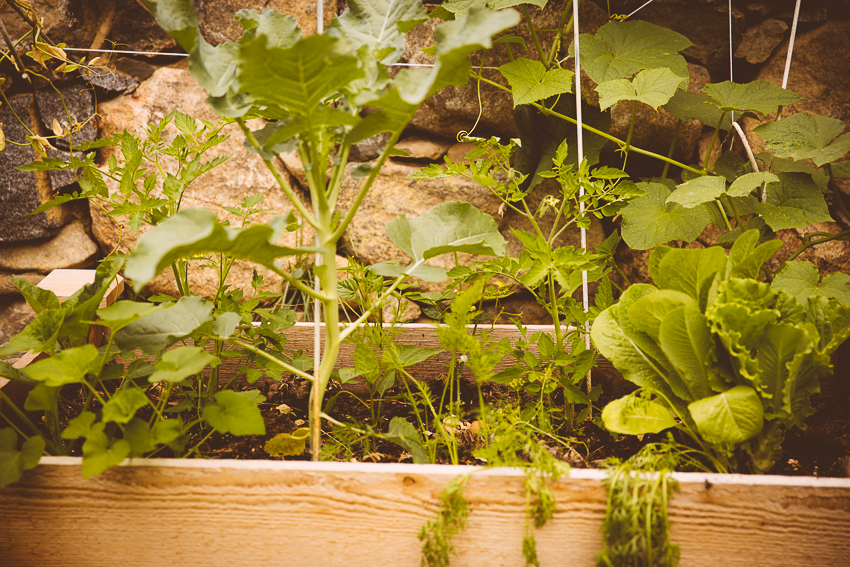 yard garden | livelovesimple.com