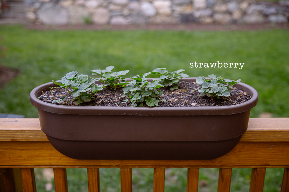 our gardens in may // livelovesimple.com