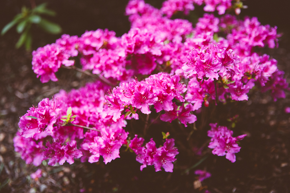 our yard & garden in may // livelovesimple.com