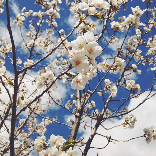 snaps of life // livelovesimple.com