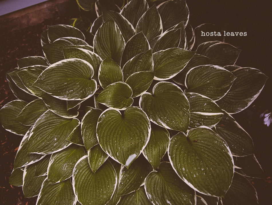 gardens in june // livelovesimple.com