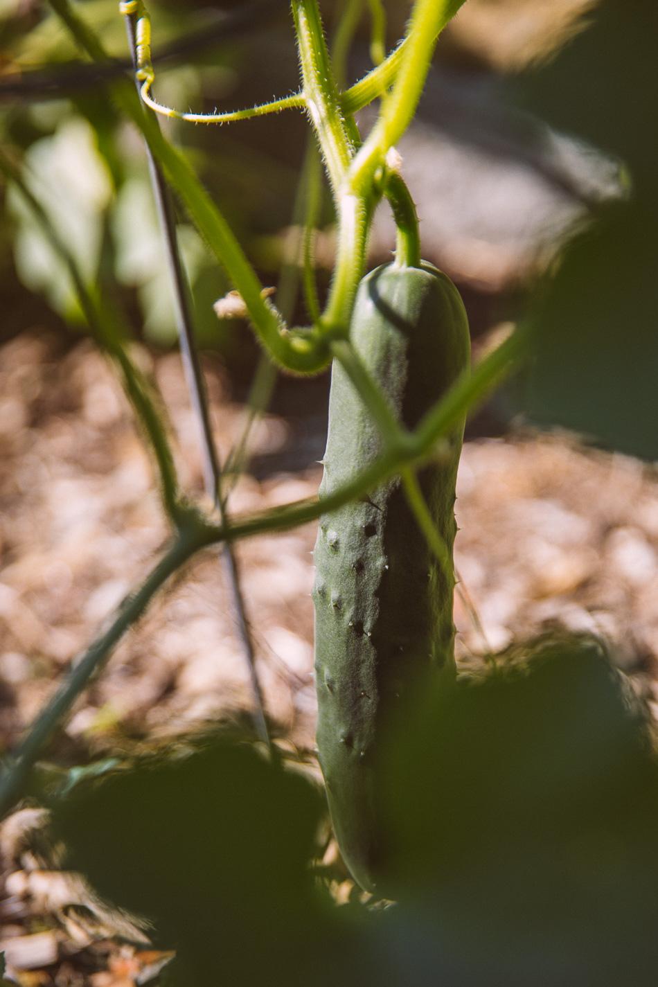 garden_late_july-13