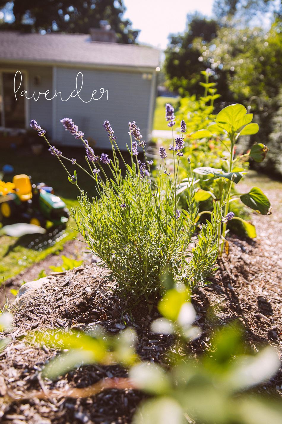 garden_late_july-17