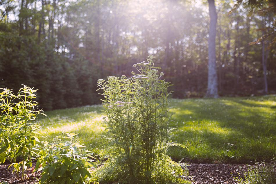 late_june_garden-1