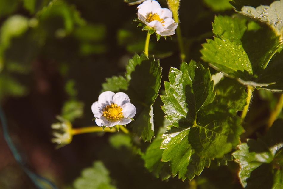 late_june_garden-5