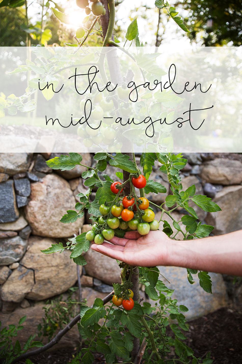 mid-august garden // livelovesimple.com