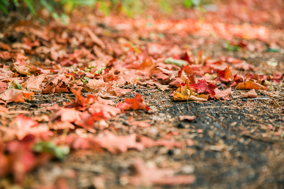 september walk // livelovesimple.com