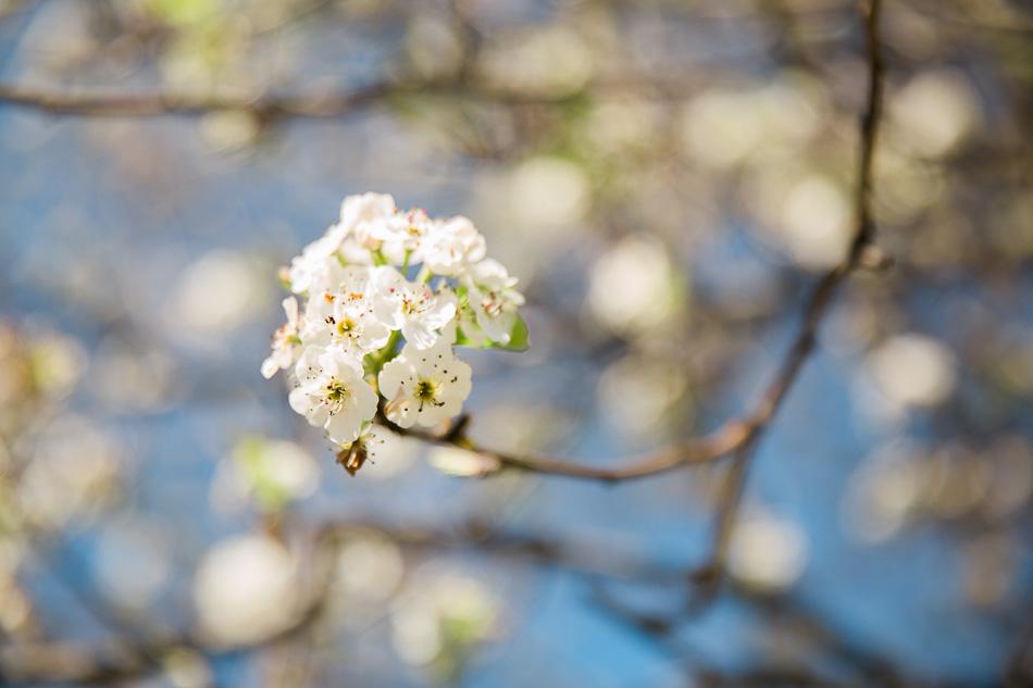 spring walk // livelovesimple.com