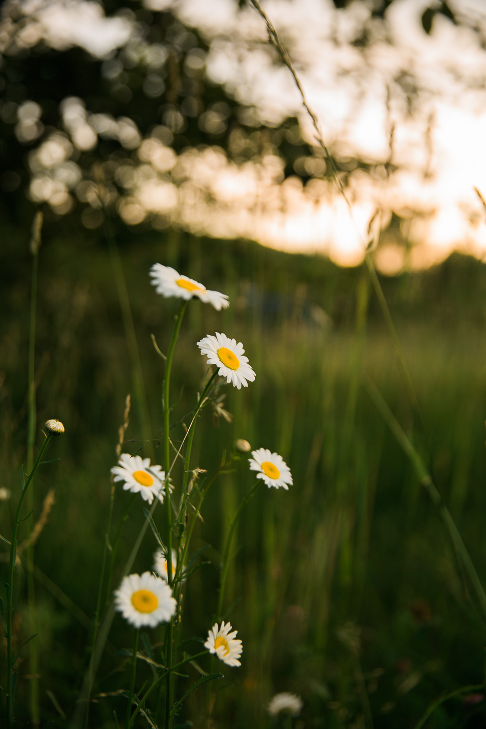 The Magic of Late Spring // livelovesimple.com