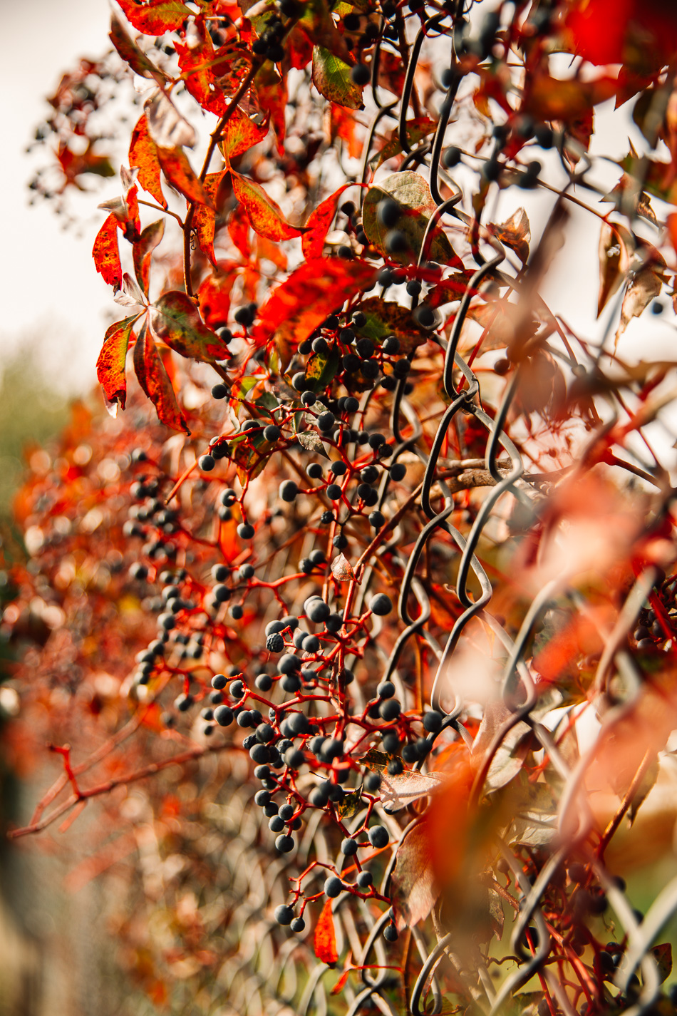 livelovesimple.com // autumn walk