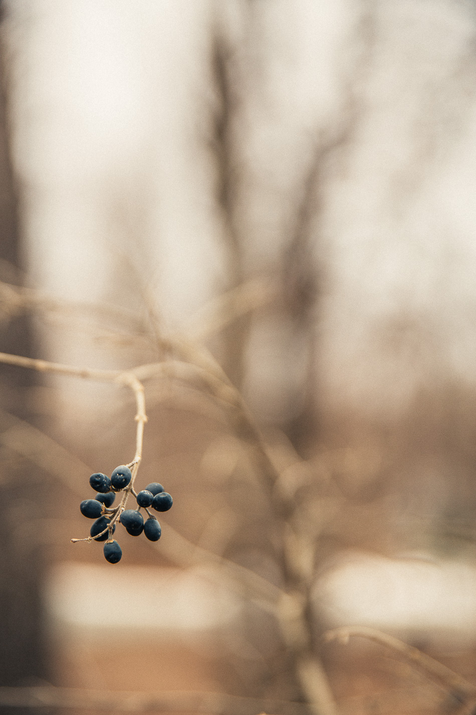 Nature in Winter // livelovesimple.com