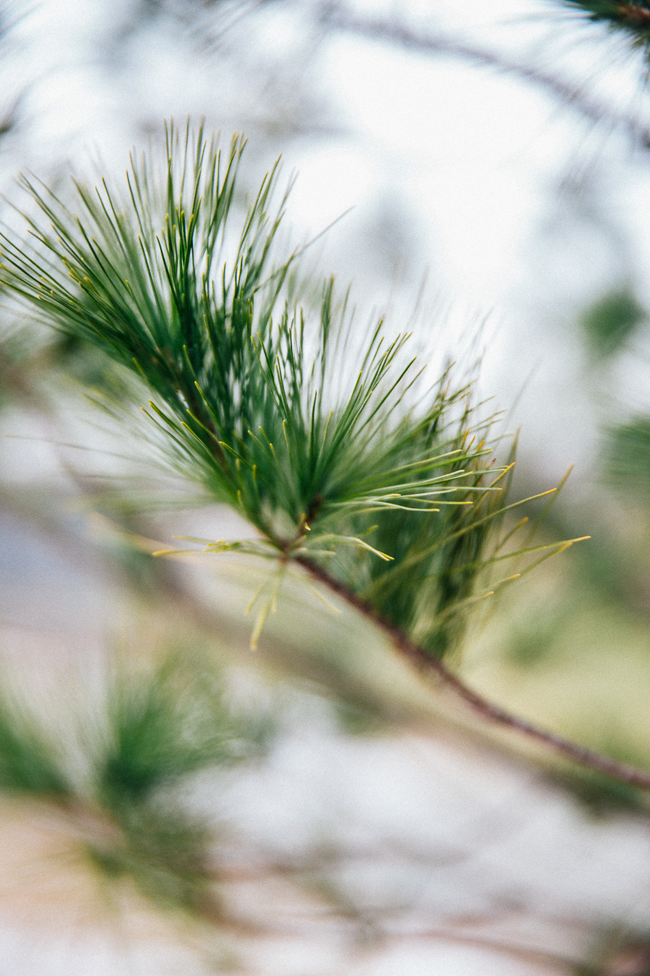 Nature in Winter // livelovesimple.com