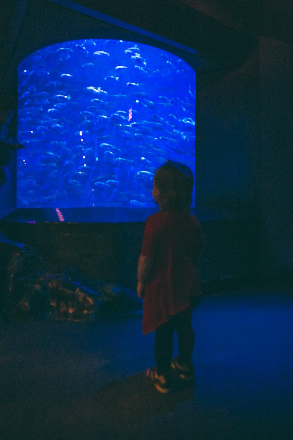Aquarium Birthday Adventure // livelovesimple.com