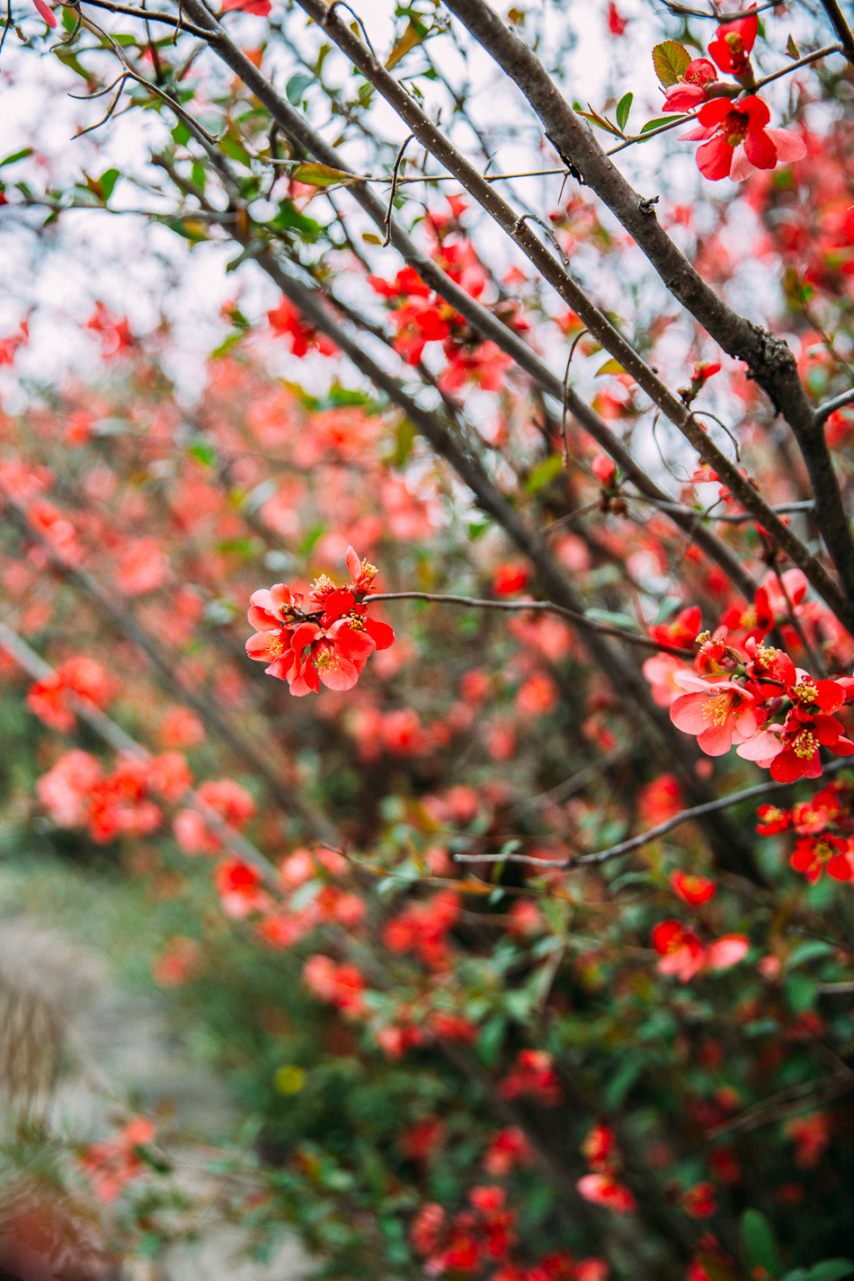 flowering bush // livelovesimple.com