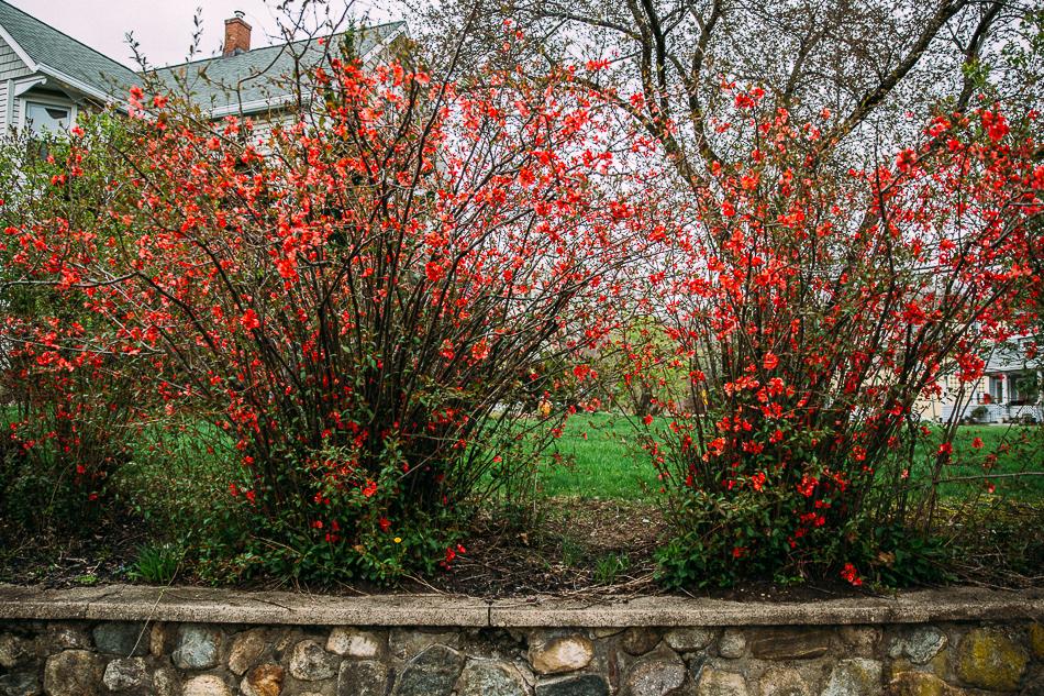 flowering bush // livelovesimple.com
