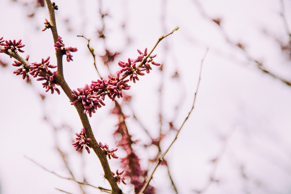spring magic // livelovesimple.com