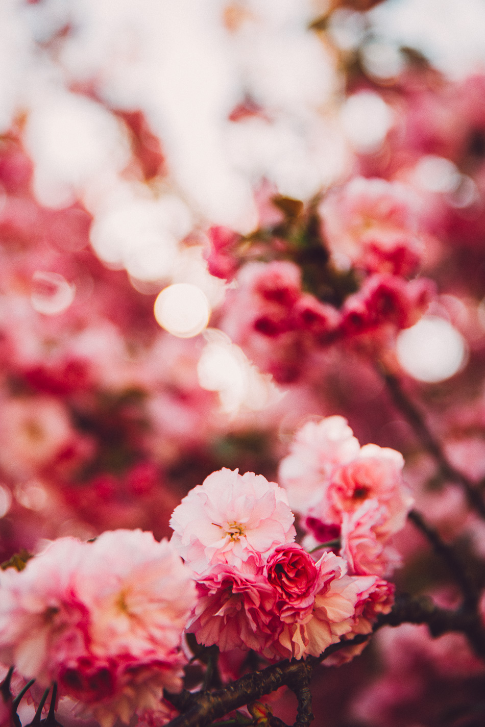 springtime // livelovesimple.com
