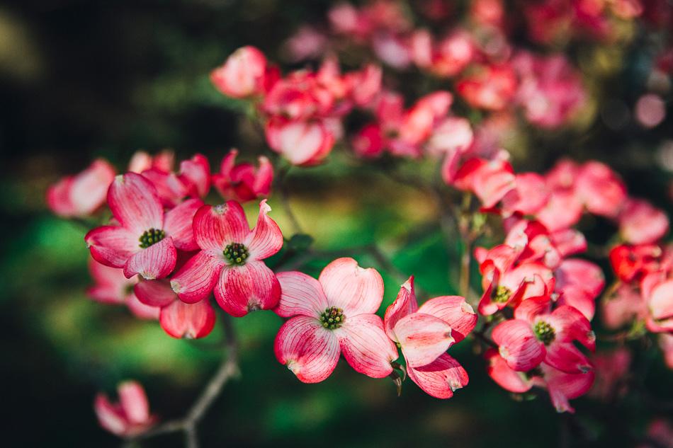 springtime // livelovesimple.com